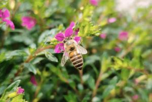 фото пчелы