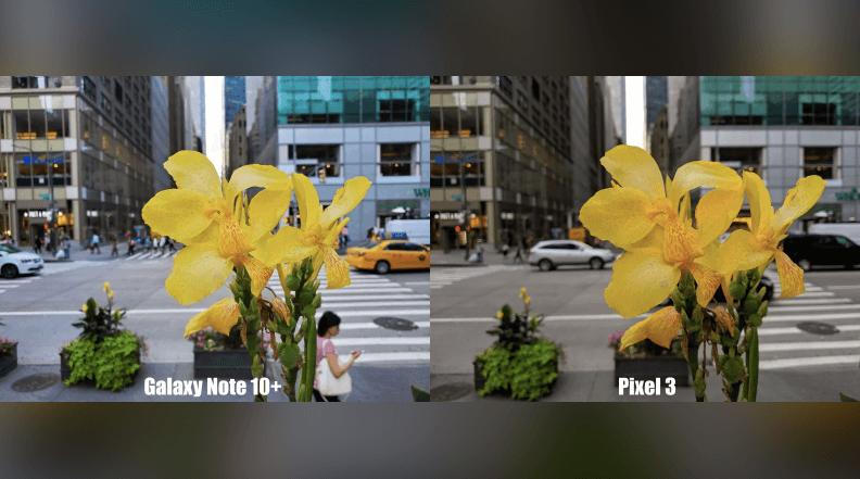 цветок на снимке